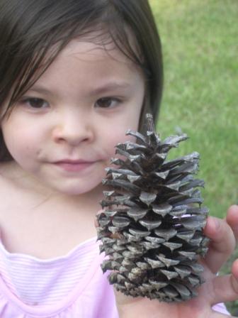 blog Ayumi holding pine cone.JPG