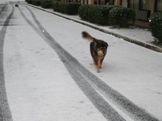 cyndi in snow.jpg